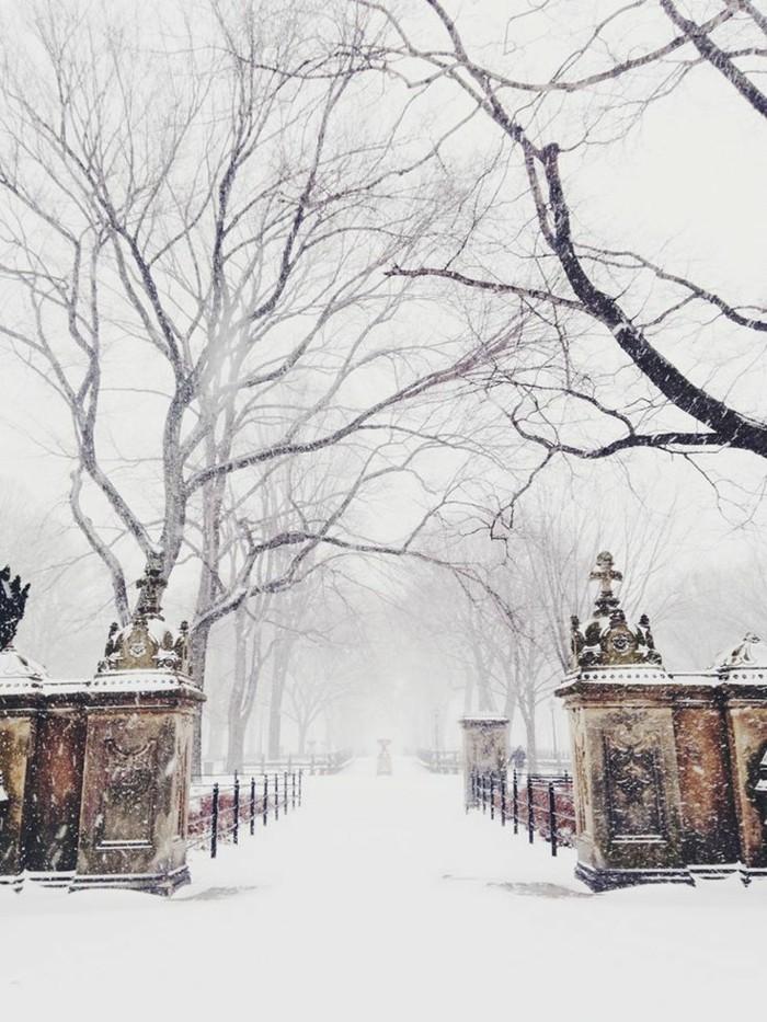 wunderschönes-Winterbild-Park-im-Winter-alles-bedeckt-mit-Schnee