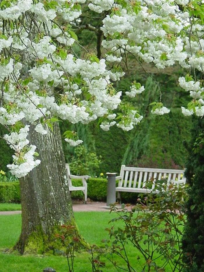 faszinierender-Garten-weiße-Blumenblüten-weiße-Bank