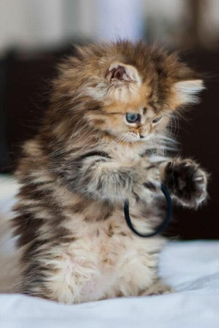 flaumiges-Kätzchen-spielt-mit-Haaraccessoire