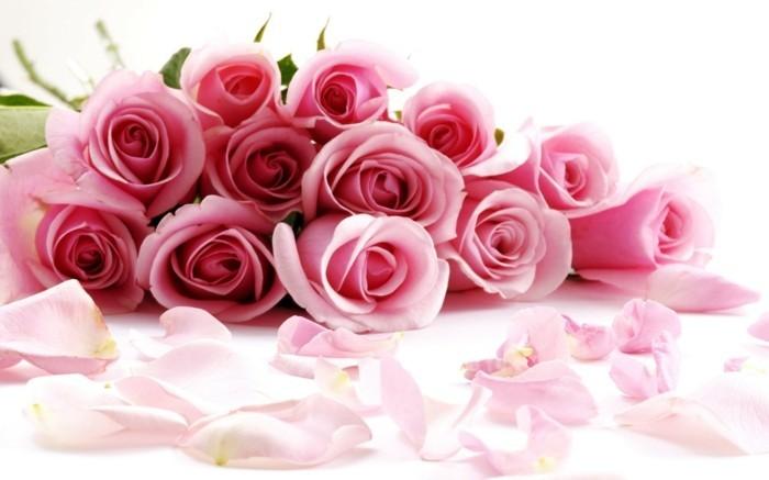 kostenlose-bilder-valentinstag-unikale-rosige-rosen-wunderschönes-aussehen
