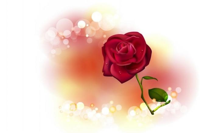 kostenlose-bilder-valentinstag-wunderschöne-rote-rose-weißer-hintergrund