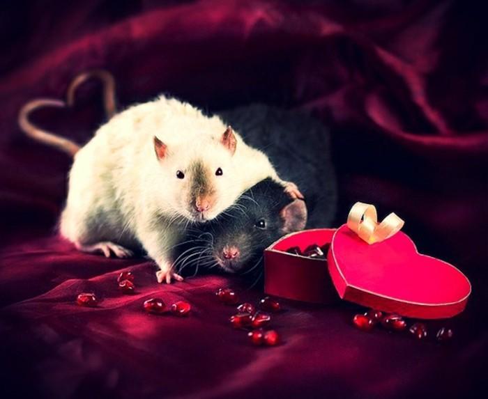 kostenlose-bilder-valentinstag-zwei-mäuser-elegante-umgebung
