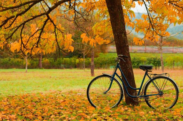 retro-Fahrrad-unter-den-Herbstblättern