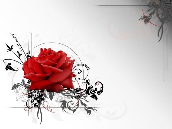 schöne-interessante-valentinstag-bilder-tolle-rote-rose