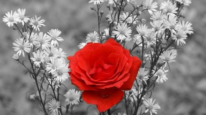 Gedichte zum Thema: Blumen, Rosen Seite 2