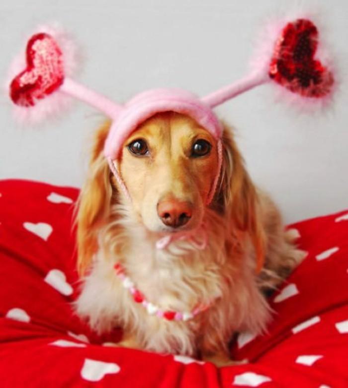 valentinstag-bilder-großer-schöner-hund-mit-einem-lustigen-hut