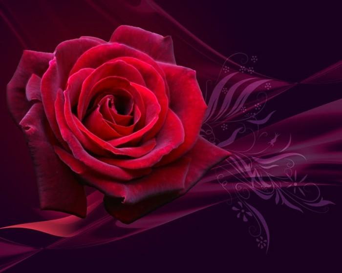 valentinstag-bilder-interessante-darstellung-rote-rose-sehr-romantisch
