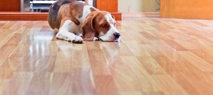 vinylboden-verlegen-toller-hund-wudnerschönes-foto