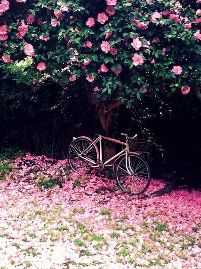 11-Baum-mit-rosa-Blüten-süßes-rosa-Fahrrad