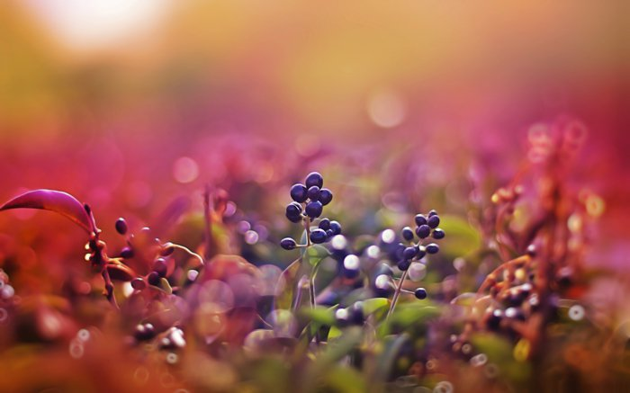 5-herrliche-Frühlingsbilder-von-der-Natur