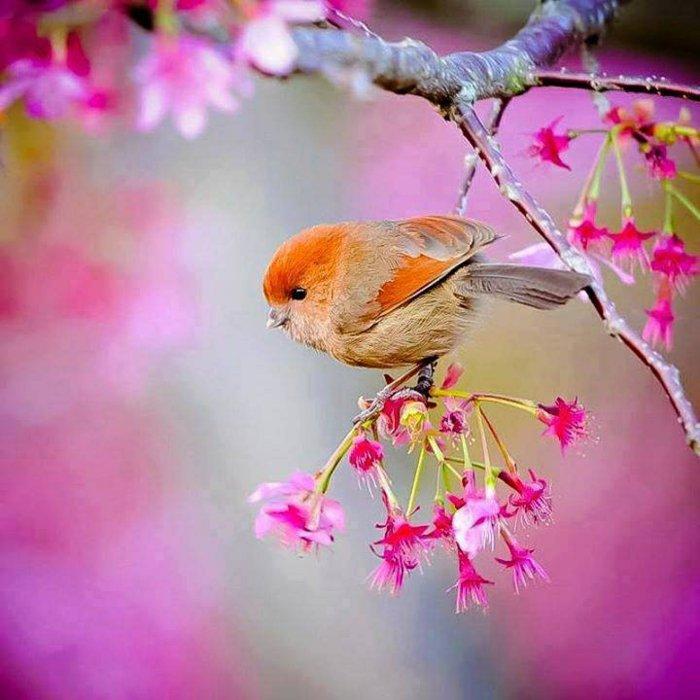 9-Frühlingsanfang-Bilder-kleiner-süßer-Vogel