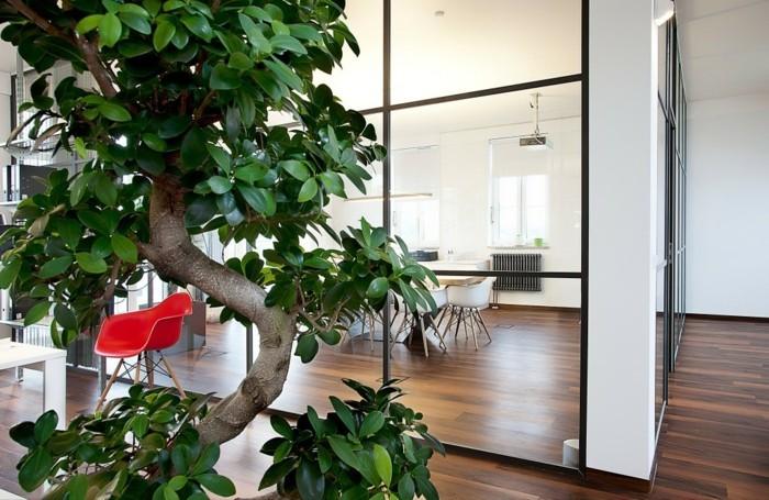 Büropflanzen-mit-dickem-Stamm-und-breiten-Blättern