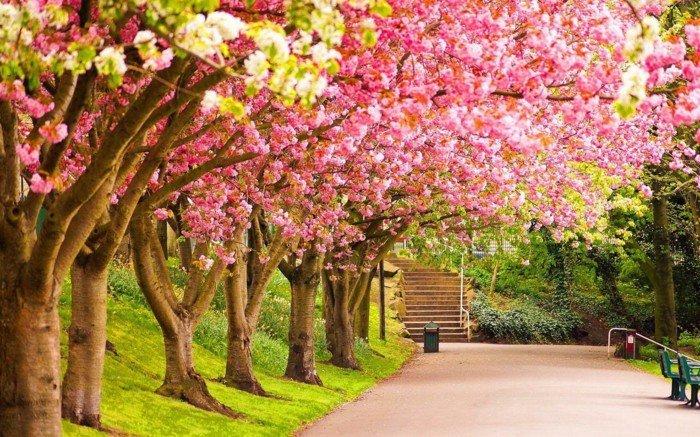 Blütenbäume-als-Symbol-des-Frühlings