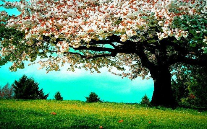 Blütenbaum-im-Frühling-frisches-Gras
