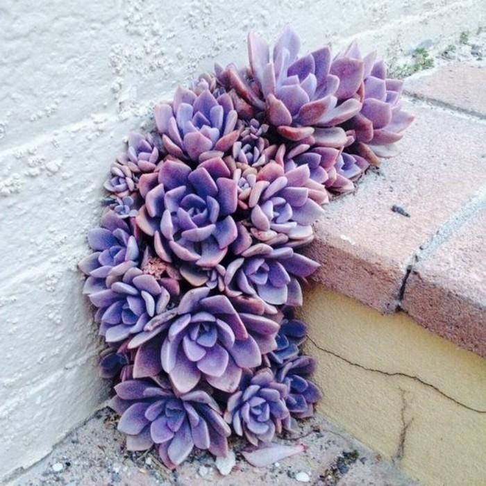 Deko-Idee-lila-Pflanze-als-Treppen-Dekoration