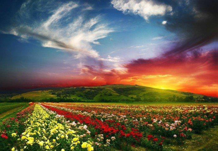 Feld-mit-fantastischen-Blumen-bezaubernde-himmlische-Strahlen