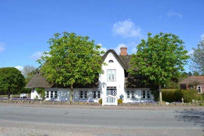 Ferienhaus-Sylt-mit-symmetrischen-Bäumen