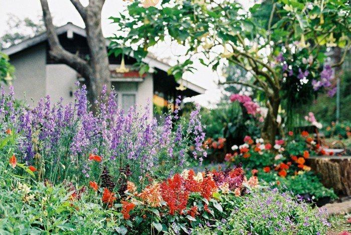 Garten-voll-mit-bunten-Blumen