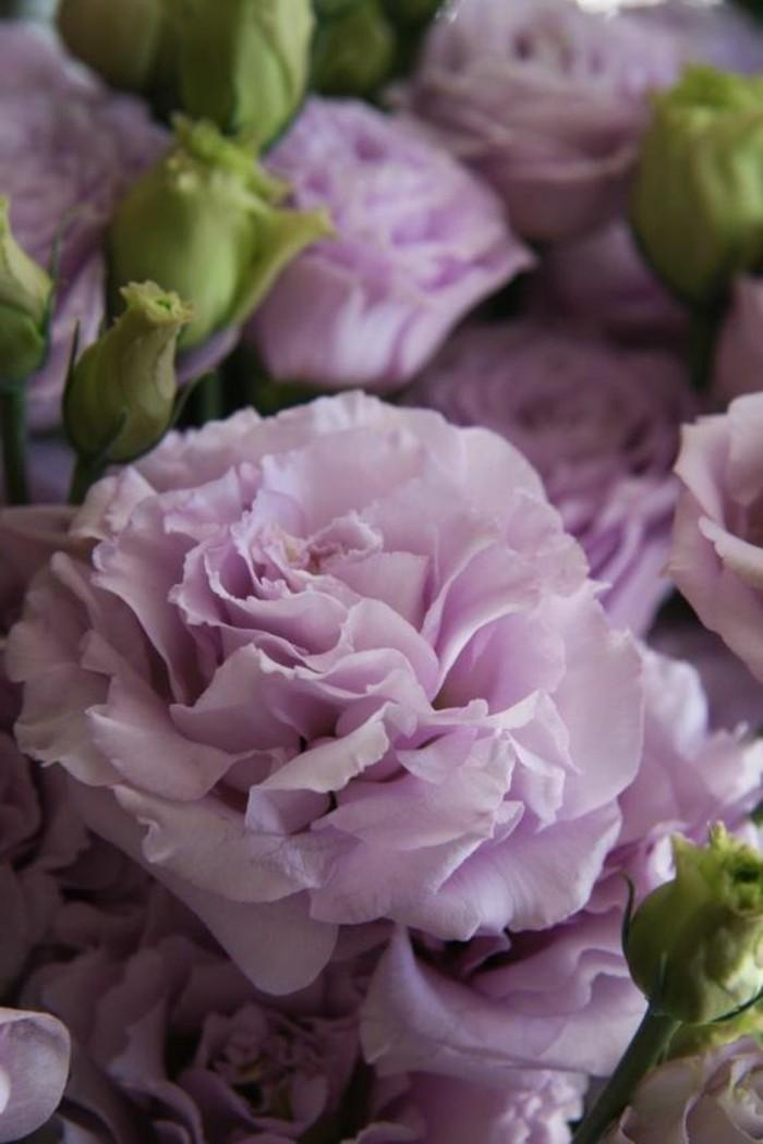 Lavender-Lisianthus-in-romantischer-lila-Nuance