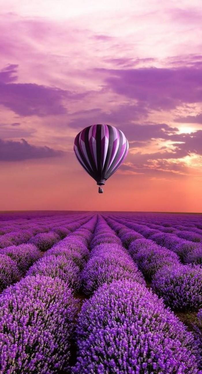 Luftballon-fliegend-über-Lavender-Feld