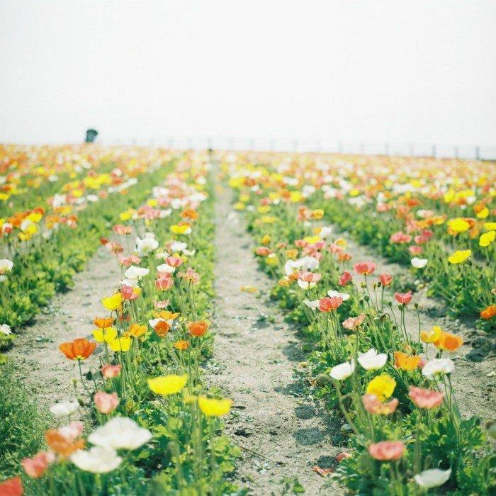 Reihen-von-wunderschönen-bunten-Frühlingsblumen