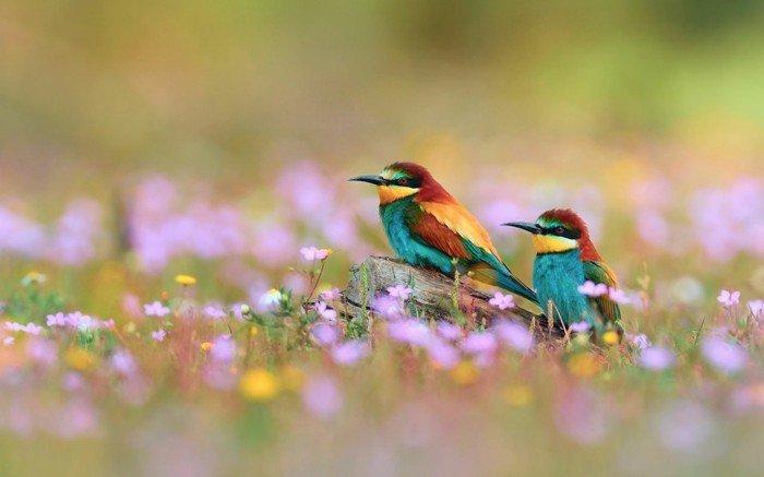Vögel-mit-einzigartigem-Aussehen-und-bunten-Federn