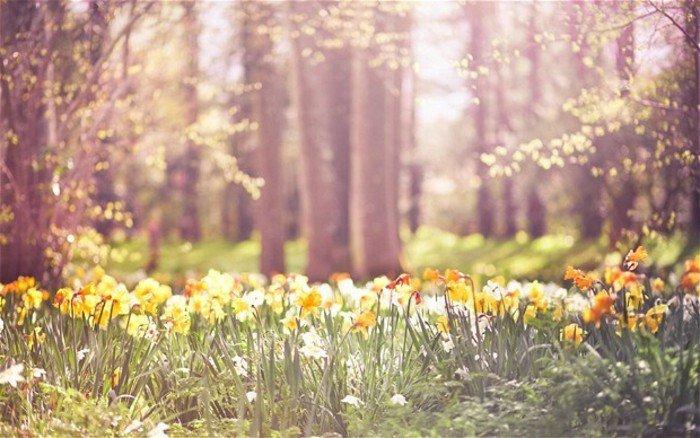 Wald-wunderschöne-Narzissen-sonniger-Tag
