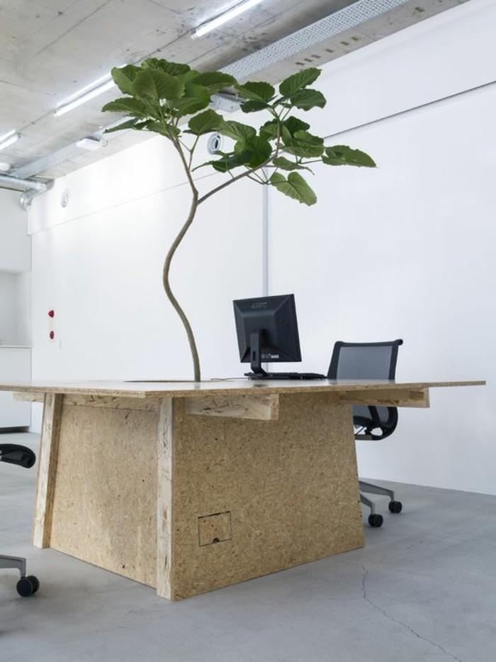 außergewöhnliche-zimmerpflanze-wie-Baum-aussehend