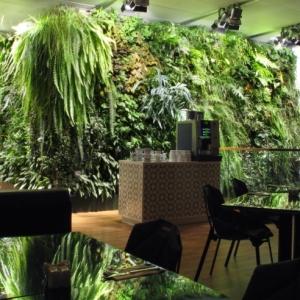 Büropflanzen - der Arbeitsplatz wird grün