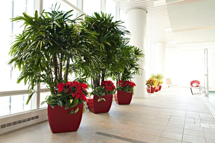 ausgefallene-zimmerpflanzen-in-großen-roten-Blumentöpfen-gestellt