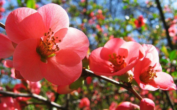 bezaubernde-rosa-Blüten-fantastisches-Frühlingsbild