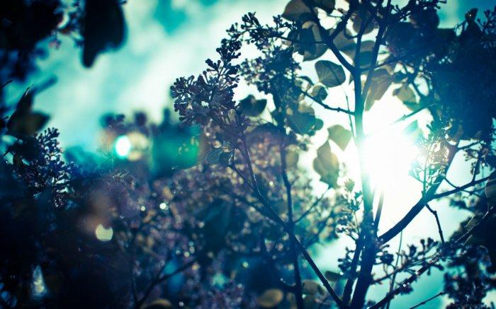 der-Morgen-kommt-Frühlingsanfang-Bilder