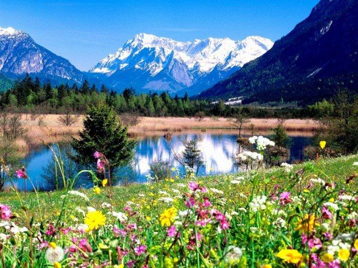 die-Natur-wacht-auf-im-Frühling