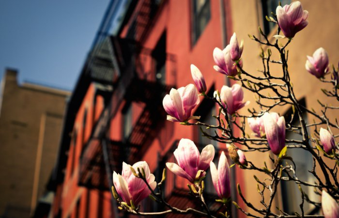 die-Stadt-wacht-auf-Frühlingsanfang-Bilder