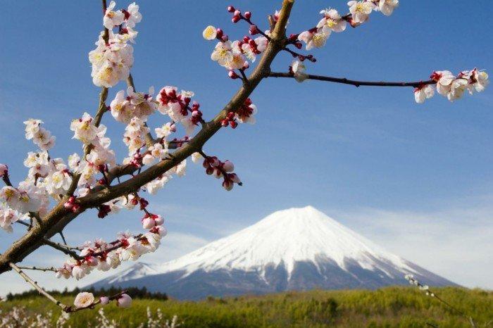 die-ersten-Blüten-des-Frühlings