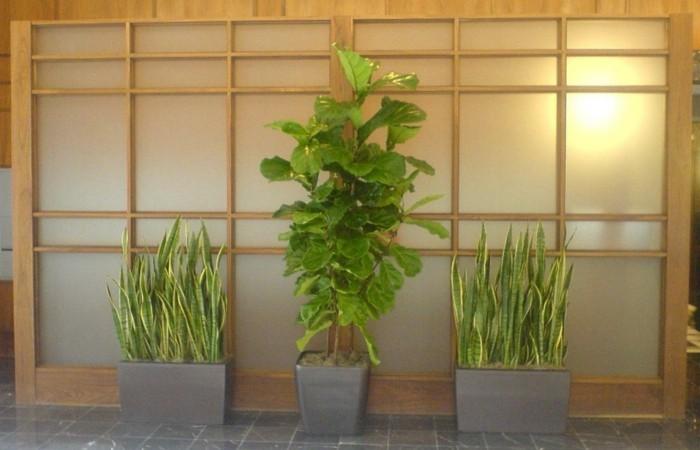 drei-symmetrisch-gestellte-pflegeleichte-pflanzen