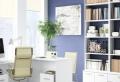 Büropflanzen – der Arbeitsplatz wird grün