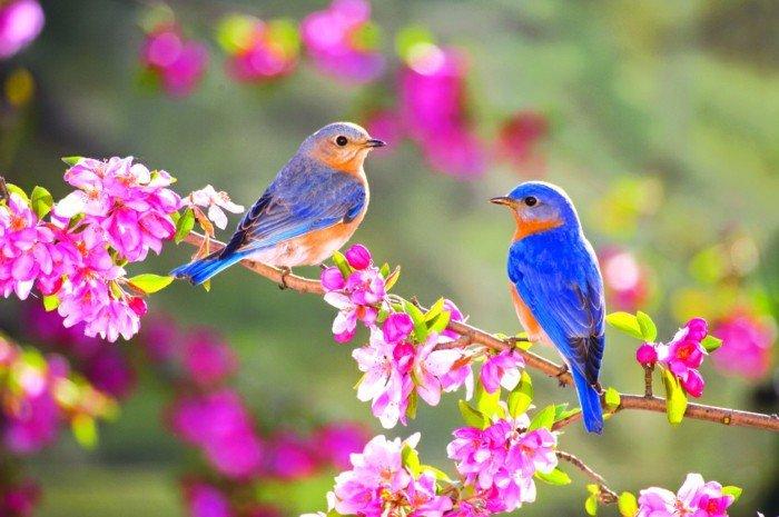 einzigartige-Vögel-mit-faszinierenden-bunten-Federn