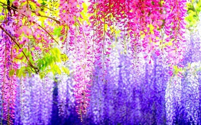 fabelhaftes-Foto-bunte-hängende-Blüten