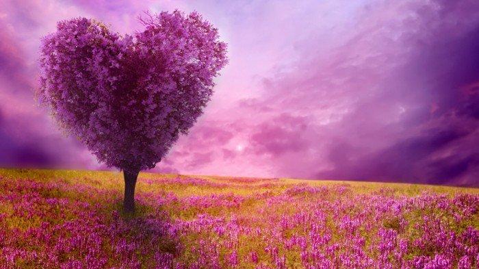 fabelhaftes-Foto-von-der-Natur-gefärbt-in-lila