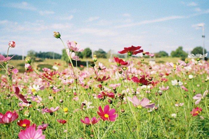fantastische-Blumen-in-rosa-Nuancen-Gras