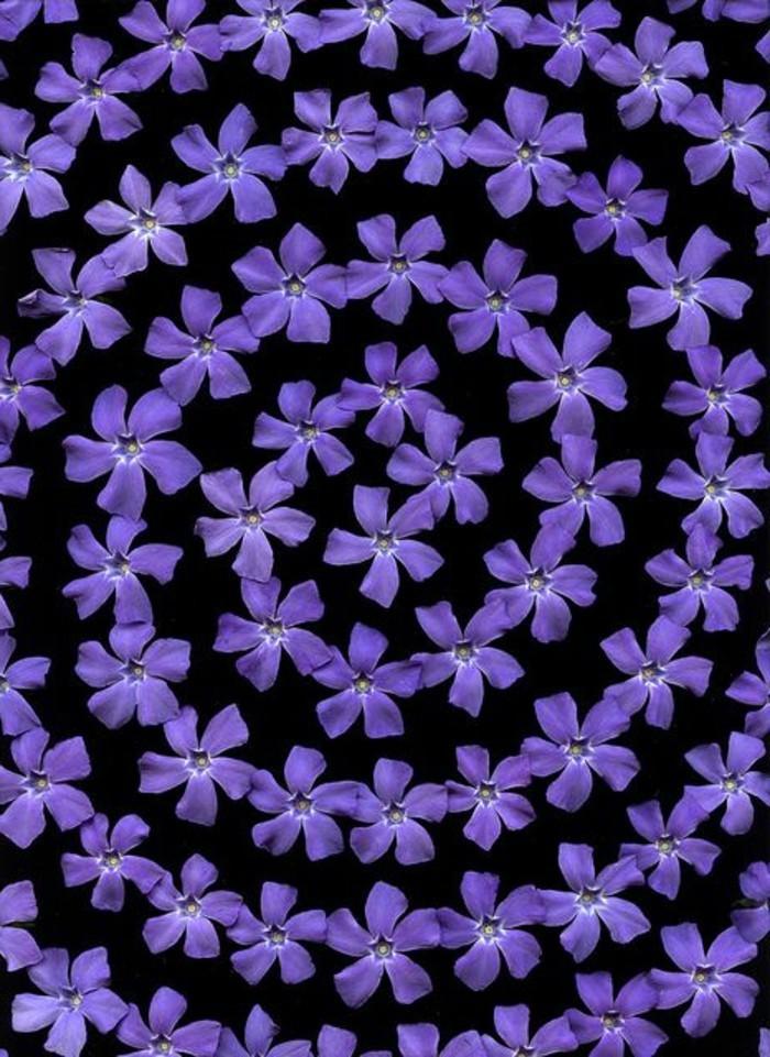 fantastisches-Bild-Kranz-aus-lila-Blüten