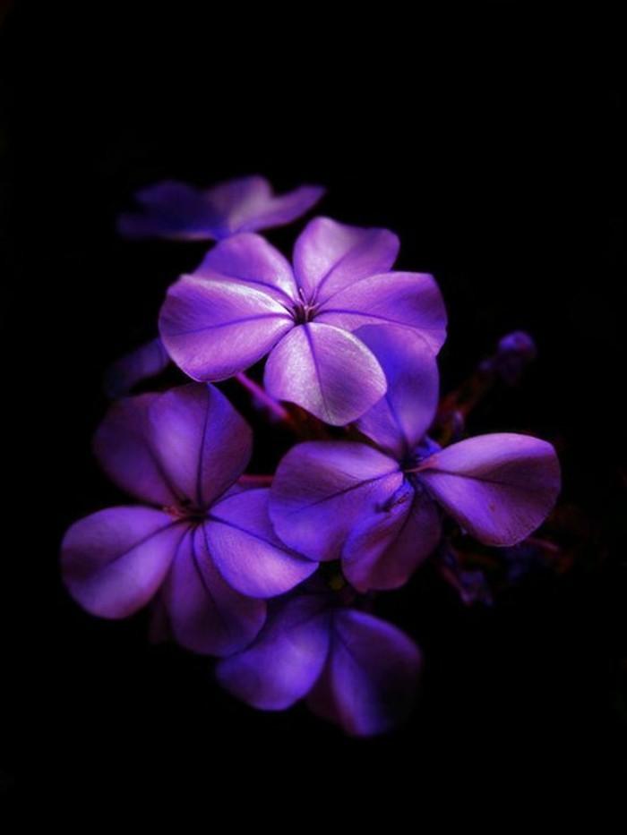 fantastisches-Foto-von-lila-Blumen