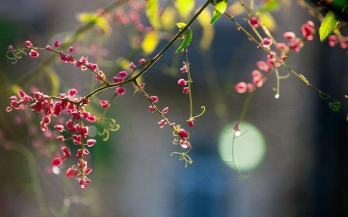 faszinierende-Frühlingsanfang-Bilder-zum-Inspirieren
