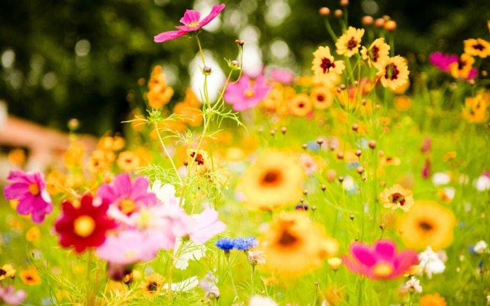 faszinierendes-Foto-von-bunten-Blumen