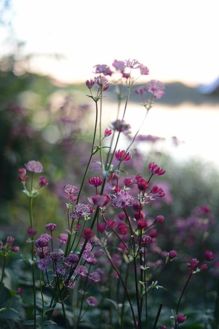 frische-Frühlingsblumen-in-rosa-und-lila-Nuancen