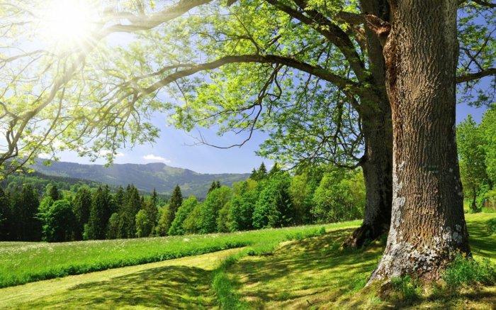 frische-Landschaft-vom-Frühling-in-frischen-Nuancen
