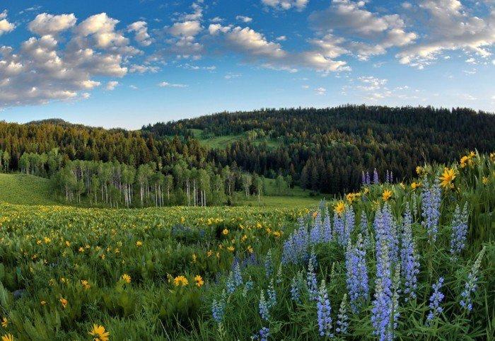frischer-Wald-fotografiert-im-Frühling
