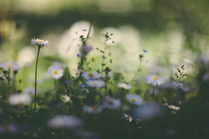 frisches-Frühlingsbild-Blumen-im-Feld