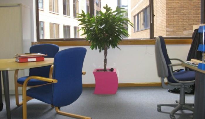 große-ausgefallene-zimmerpflanzen-in-rosa-blumentopf